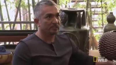 Cesar Millan - Insecure dogs start fights.mp4