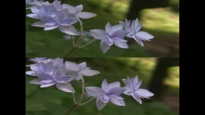 3D-Waltz-of-the-Flowers-(YouTube-3D-HD-Test).mp4